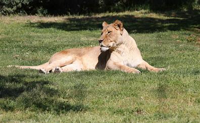 Visit the La Barben Zoo (La Barben)