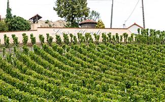 Die Weinberge von Sancerre und Pouilly