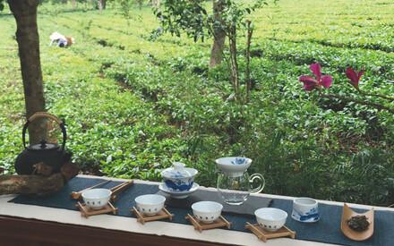 Tout l'art du thé
