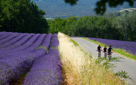Languedoc / Provence