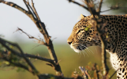 In the land of lions and leopards