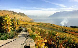 Le vignoble de Lavaux
