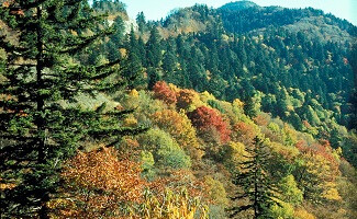 Great Smoky Mountains National Park, Tennessee et Caroline du Nord