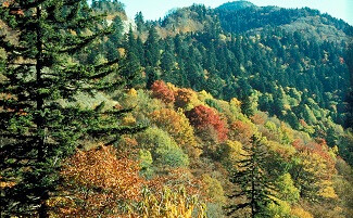 Parco Nazionale delle Great Smoky Mountains, Tennessee e North Carolina