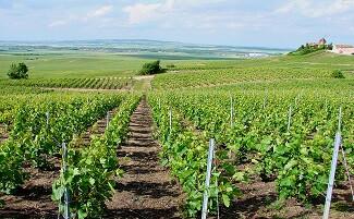 Saint-Maximin winery