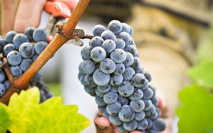 The 10 Best Places to Enjoy |a Wine Harvest in Europe
