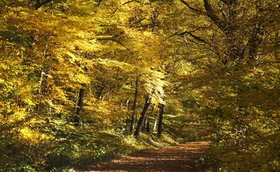 Promenade dans la Forêt du Tronçais