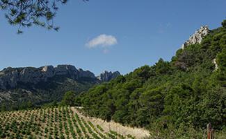 Côtes du Rhône vineyards, from Sainte-Cécile to Gigondas