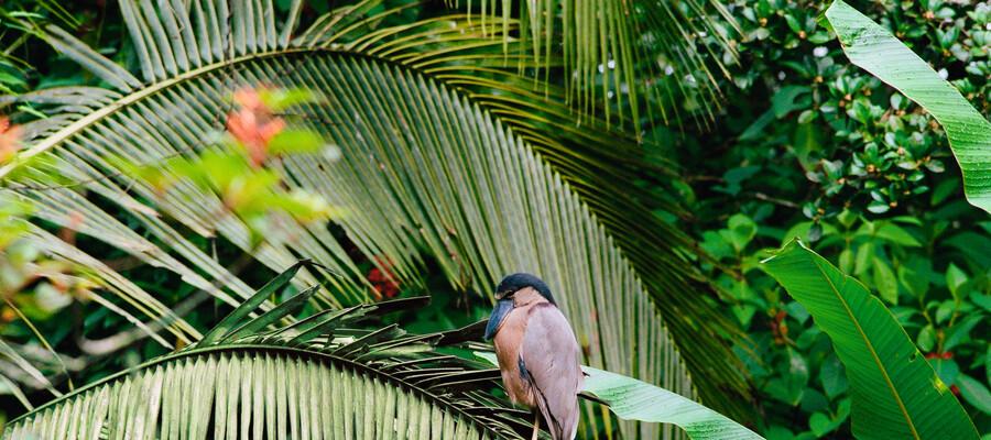 Nayara Gardens