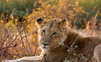 Safari photo, so the experience never ends! Londolozi Private Game Reserve