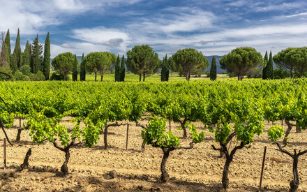 Languedoc / Provenza