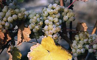Les vins Kracher