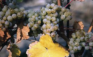 Kracher wines