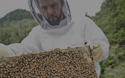 S.O.S abeilles