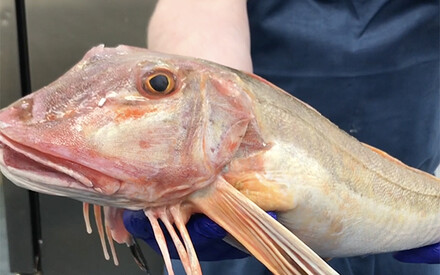 Fish Unknown | Chef Raymond Blanc, | Belmond Le Manoir aux Quat' Saisons, UK