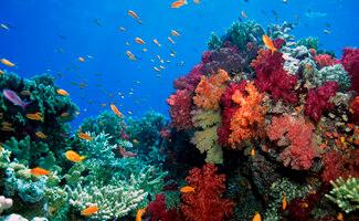 Passage marin de Vatu-i-Ra