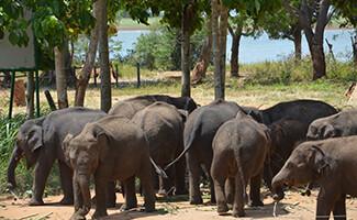 El orfanato de elefantes de Udawalawe