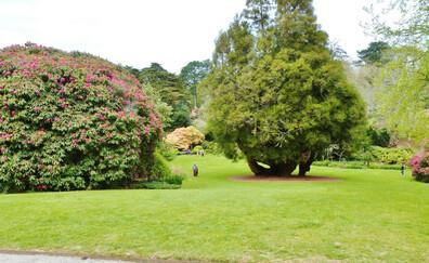 Stroll in Trelissick garden