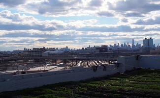 Brooklyn Grange, the most famous urban organic farm