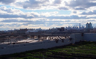 Brooklyn Grange, the most famous urban organic farm