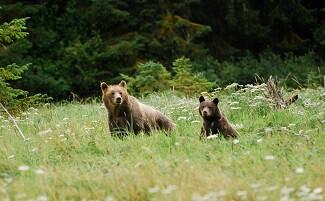 L'incontro con gli orsi