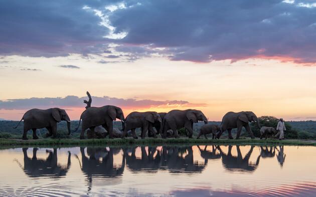 Safaris et vie sauvage en Relais & Châteaux