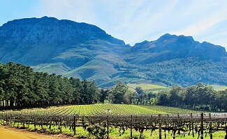 Tasting the wines of Stellenbosch