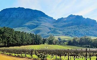 Verkostung der Weine von Stellenbosch