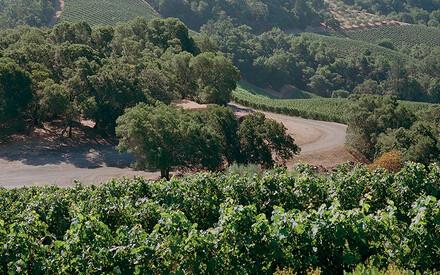 Les dix savoureuses leçons |de la Napa Valley