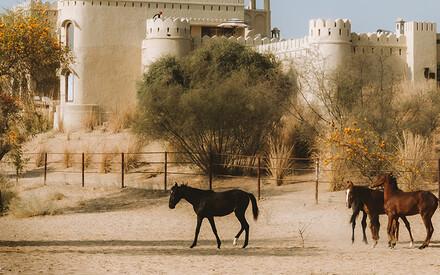 An Oasis in the Thar Desert