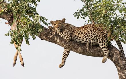 Londolozi, Africa's safe haven