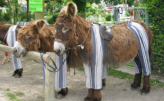 Donkey Clothes at the Beach
