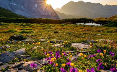Alpine flower trail in Leiterli