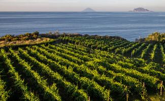A unique wine, Malvasia, Salina