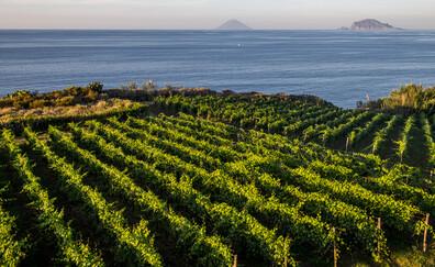 Un vino unico, la Malvasia, Salina