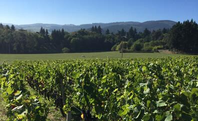 Sérol wine estate, sharing wines (Renaison)