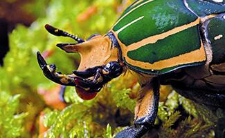 Micropolis ou o encantador mundo dos insetos