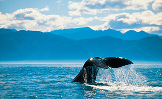 Beaches and whale watching