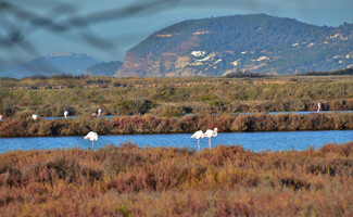 Giens Peninsula, a paradise for kite surfing and pink flamingos
