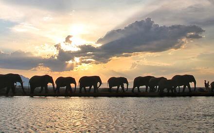 À la rencontre des éléphants:|histoire d'amour à Jabulani