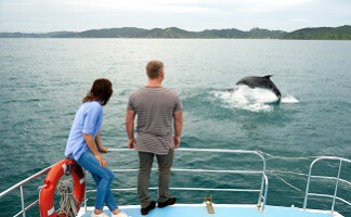 Caboter avec les dauphins, Bay of Islands