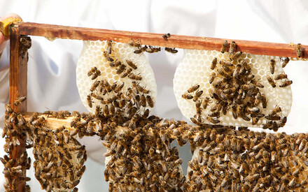 Beekeeper, a job|for those who think the future