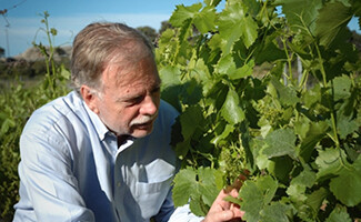 L'Affectif, der Wein von Jean-André Charial