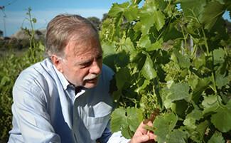 L'Affectif, il vino di Jean-André Charial
