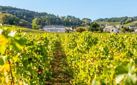Burgundy / Franche-Comté