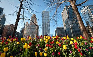 Frank Lloyd Wright, Oak Park, Chicago