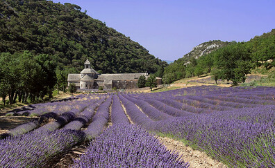 Behind the lavender, the Abbey of Sénanque (Sénanque)
