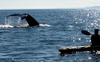 Dalle balene