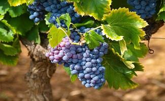 The wines of Ca' del Bosco, Erbusco