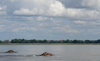 The Zambezi by canoe